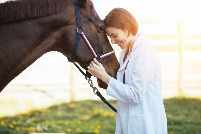хочу стать ветеринаром