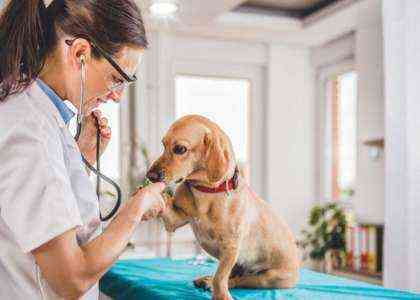Как стать ветеринаром.
