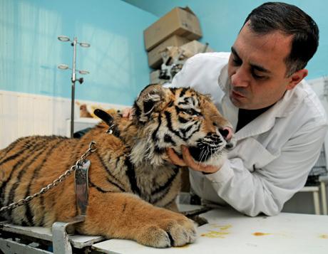 Курс физиологии и анатомии животных