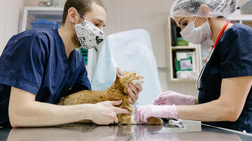 курсы ветеринаров,