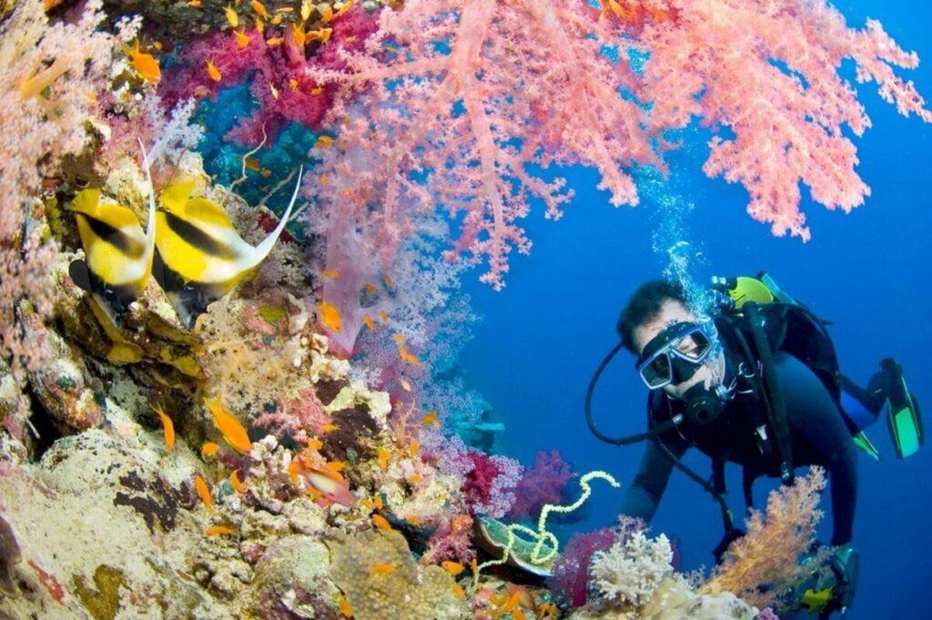 подводное плавание с аквалангом подводный мир
