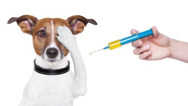Вакцинация собаки от бешенства